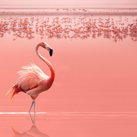 Flamingo - sur mesure